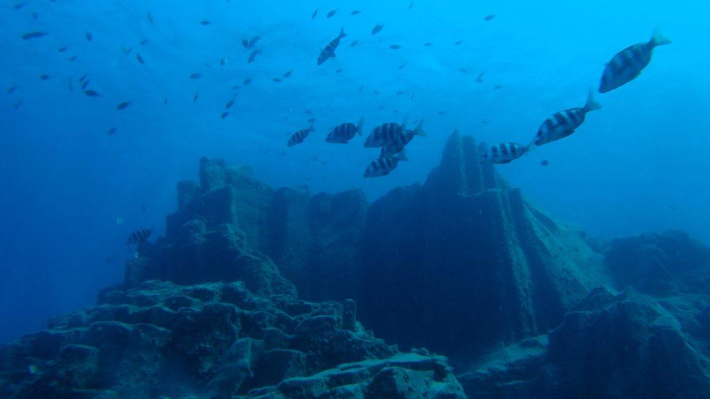 Les falaises sous marines de Los Gigantes observables en plongée.