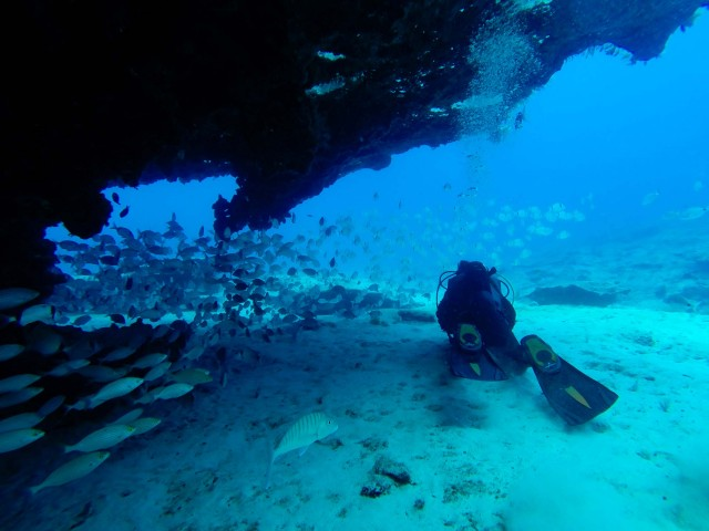 Diving Angel - Plongée à Tenerife